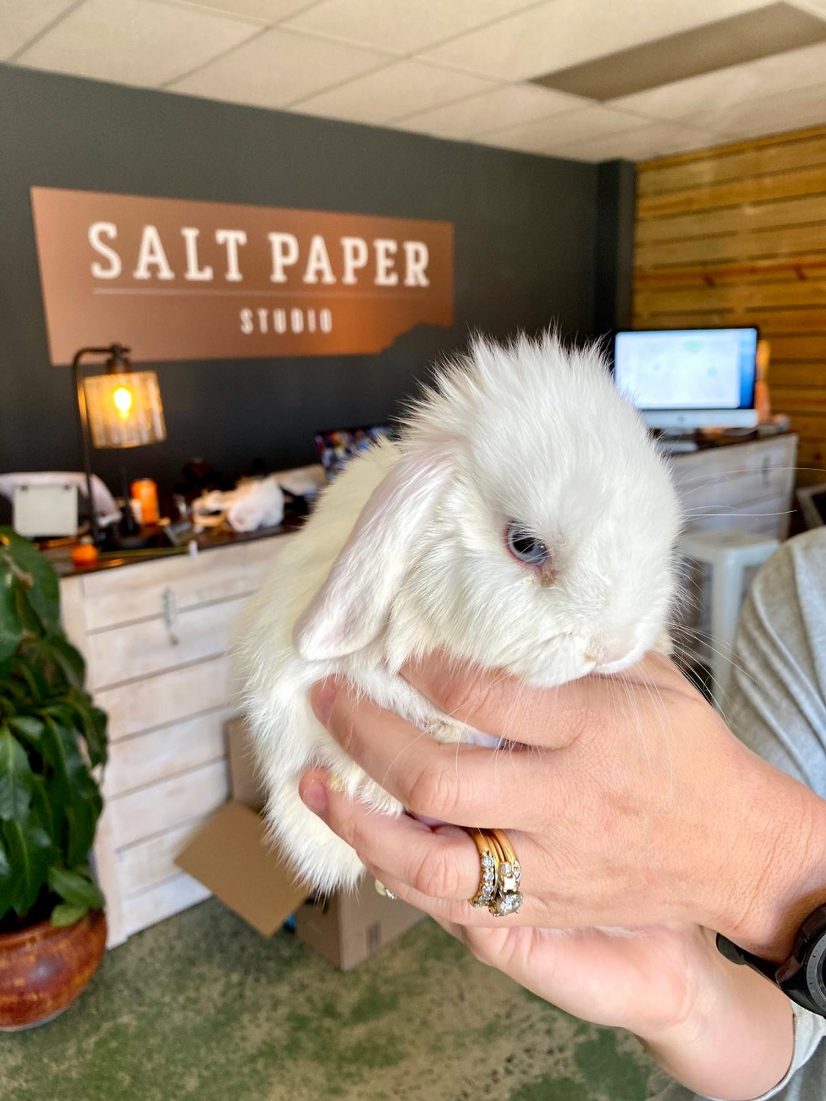Close-up shot of fluffy white bunny at Salt Paper Studio in Rock Hill, SC